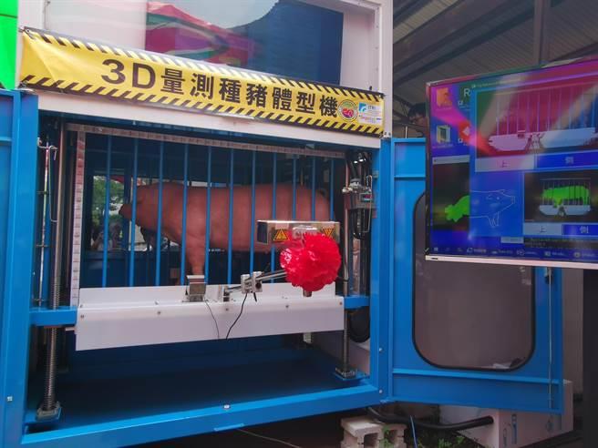 種豬通過3D自動量測種豬體型機通道後,15 秒內資料就呈現在右側螢幕上。(劉秀芬攝)