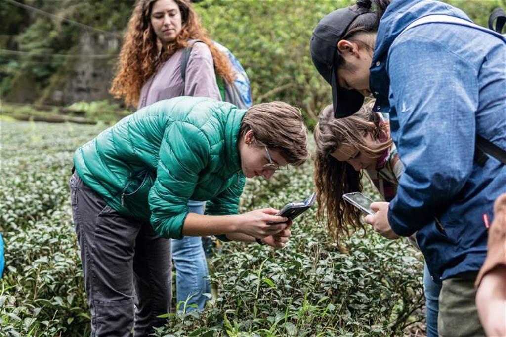 台大為Minerva Schools舉辦的工作坊 「從土地到手裡的台灣茶」,帶領學生到 坪林茶園觀察。(圖/台灣大學國際事務處提供)