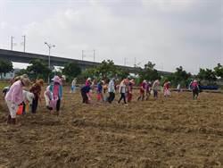 新市毛豆節11月確定照辦   農會號召產銷班青農整地種毛豆