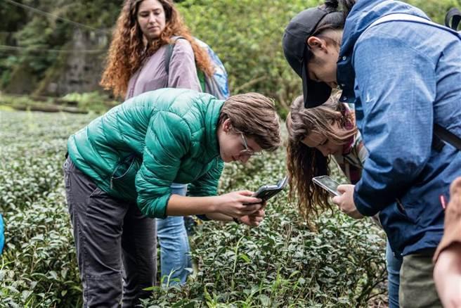 台大为Minerva Schools举办的工作坊 「从土地到手里的台湾茶」,带领学生到 坪林茶园观察。(图/台湾大学国际事务处提供)