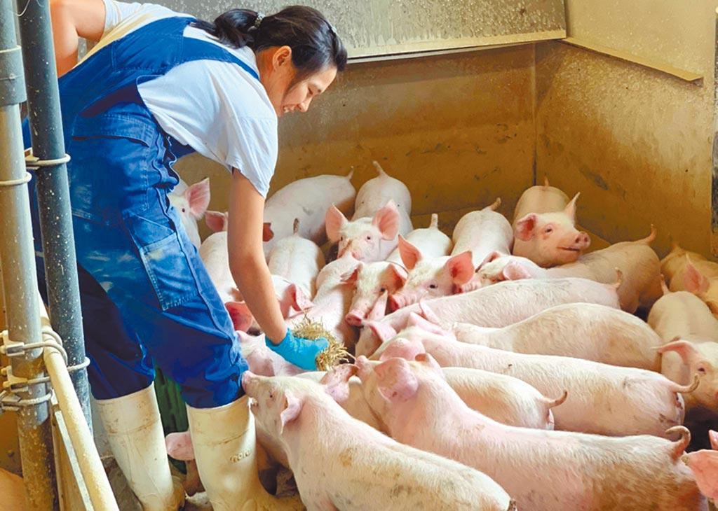 屏科大提供畜產系學生跨海丹麥實習先進養豬產業,盼為台灣培養未來人才。(屏科大提供/林和生屏東傳真)