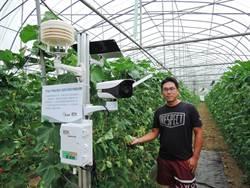 青農引進智能設備3個月 洋香瓜裂果率降低15%