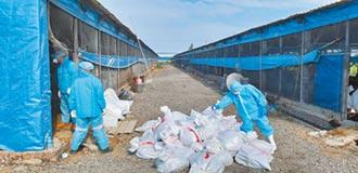 處理死廢禽畜 化製廠明年落成