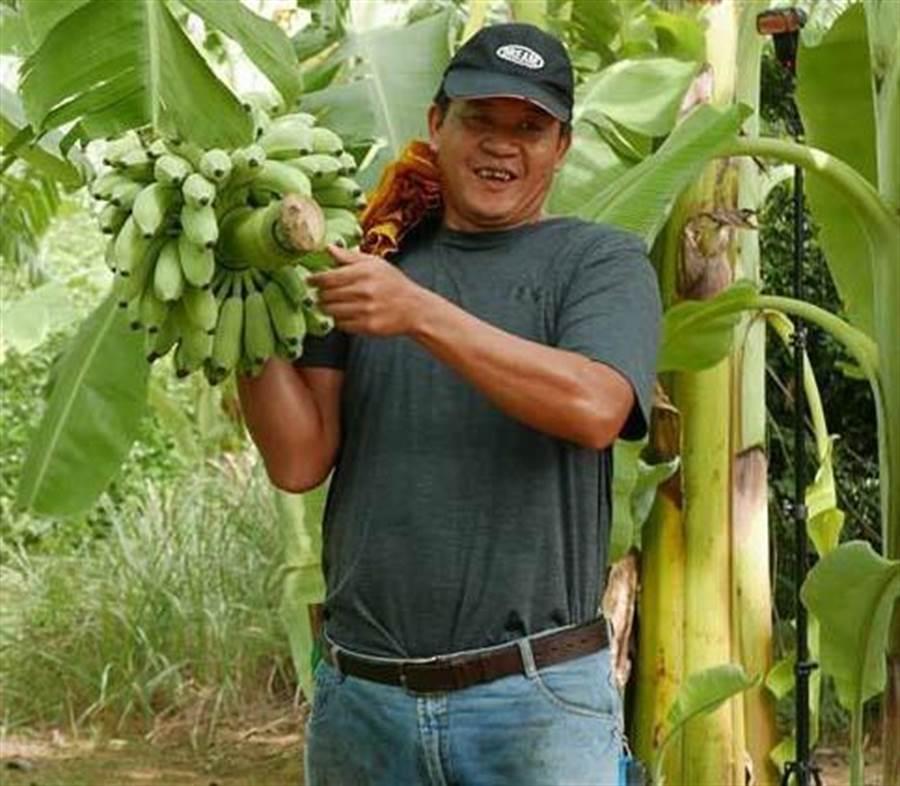 青農林世文種出的「內門惡地芭蕉」,品質格外紮實香Q,加上有全國唯一的履歷認證,讓他芭蕉每公斤賣到140元。(林雅惠攝)