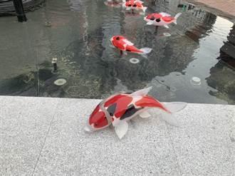 新竹城隍廟玻璃鯉魚遭破壞 魚身裂兩半