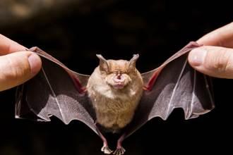 桶裝蠔油撈出「完整蝙蝠屍」男崩潰:全家吃了3個月