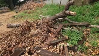 焚化爐不燒樹枝落葉 彰縣傳校園堆肥坑爆滿