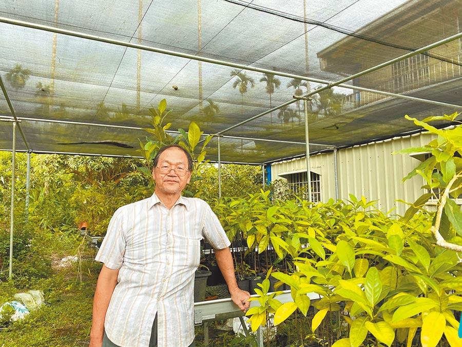 鍾志明自農試所嘉義分所退休後,在自己的園子內持續種植、研究果樹,也保留優秀的種苗。(張亦惠攝)