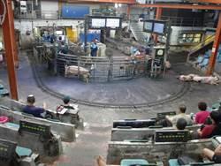 瘦肉精美豬進口效應?雲林肉品市場豬隻交易增1成