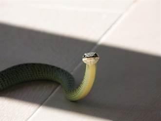蛇闖寺廟緩爬和尚背後 高抬起頭下秒驚現奇蹟