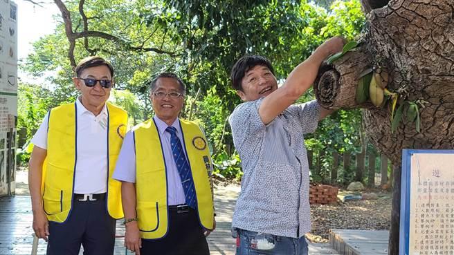 紅螞蟻休閒園區董事長林敏錡(右一)說,移植到樹幹上的蝴蝶蘭,預計明年春天、四月就會盛開,共有10多種花色,美麗繽紛。(謝瓊雲攝) 。(謝瓊雲攝)
