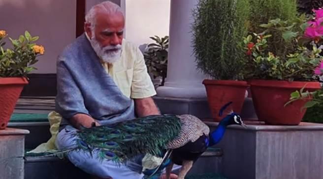 印度疫情失控,總理莫迪還於社群媒體發布在家餵孔雀的影響,引來輿論與在野黨狠批。(圖/youtube影片截圖)