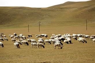 強迫勞動侵犯人權 美對新疆部分商品祭暫扣令