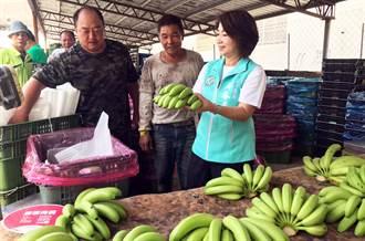 香蕉產地崩盤 屏縣府協助收購去化