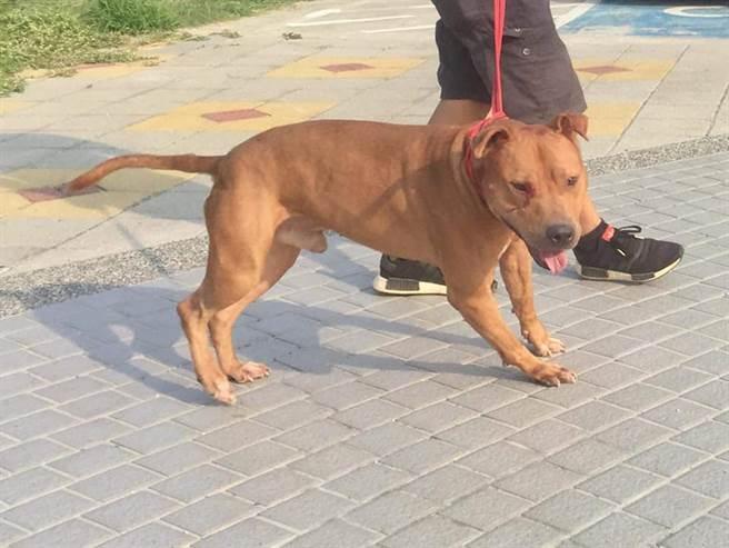比特犬眼睛附近被抓傷,甚至還在滲血(圖/網友Yvonne Tsao提供授權)