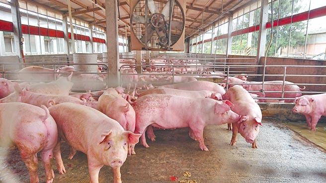 雲林縣府與在地養豬業者取得共識,堅守商譽及對民眾的承諾,絕對不會使用瘦肉精,鞏固「雲林良品豬」的招牌。(本報資料照片)