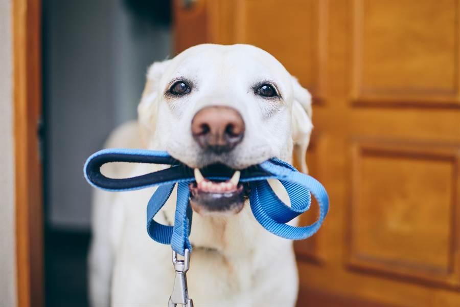 遛狗遛到一半牽繩斷了,為了不讓愛犬亂跑,因此主人繼續舉手假裝在拉(示意圖/達志影像)
