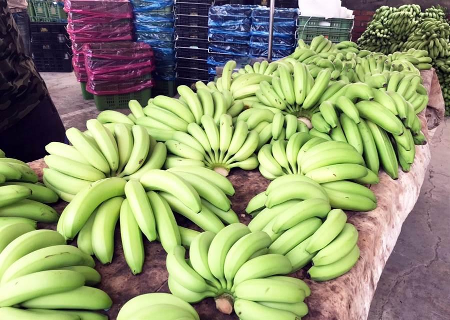 全台香蕉產地價格崩跌,前高雄市農業局長吳芳銘痛批,政府只有補助去化一招,沒有其他有力作為。(資料照片 林和生攝)