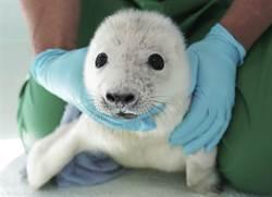 小海豹初次洗澡「趴浴缸旁拒下水」 被抱進去秒玩嗨