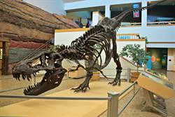 暴龍化石「史丹」 將在紐約拍賣 期望創下高價格