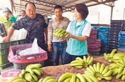 蕉金變蕉土 高屏保價收購