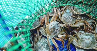 長江5大淡水湖禁漁10年 專家:濫竽充數的大閘蟹最先被淘汰
