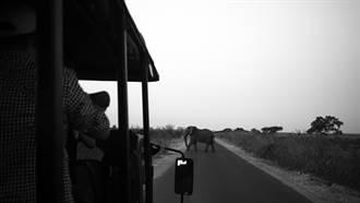 非洲動物園