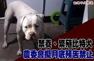 禁養、繁殖比特犬 農委會擬月底預告禁止