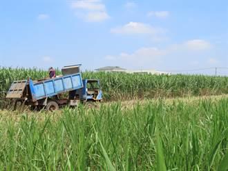 畜牧廢棄物再利用 柳營酪農區近9成業者這樣做