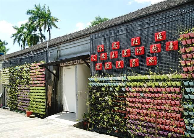 大旗美農村體驗物產直賣所外設置大面積植栽牆,不只觀賞及降溫,可食用的植物也是食農教育的一環。(圖/曾信耀攝)