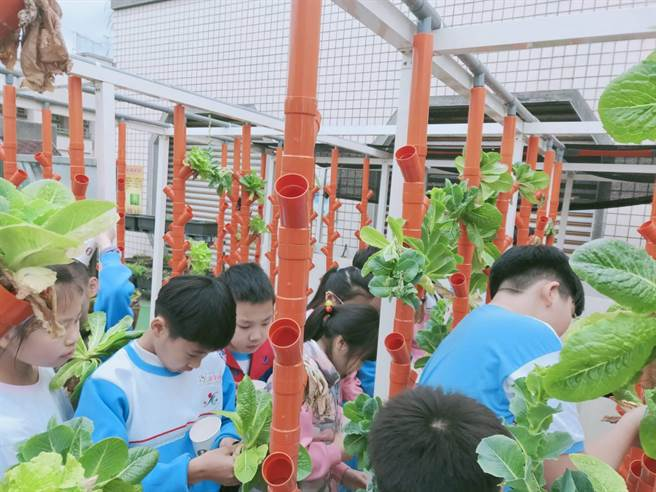 光復國小獲得金熊級低碳校園標章,推動蚓菜共生,校園生態豐富。(新北市環保局提供/葉德正新北傳真)
