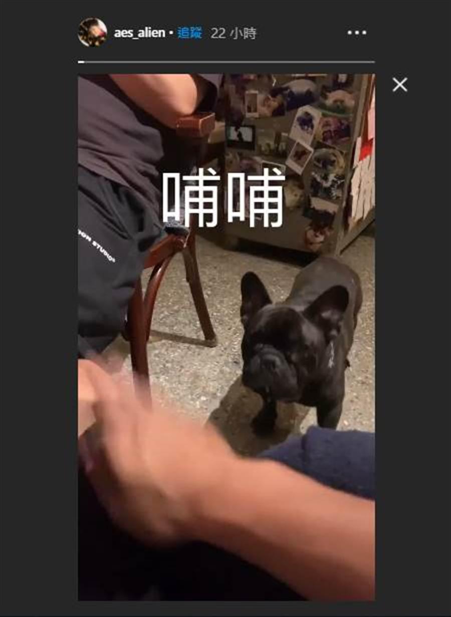 黃鴻升昨下午才在IG限時動態曬狗狗影片。(圖/取材自黃鴻升Instagram)