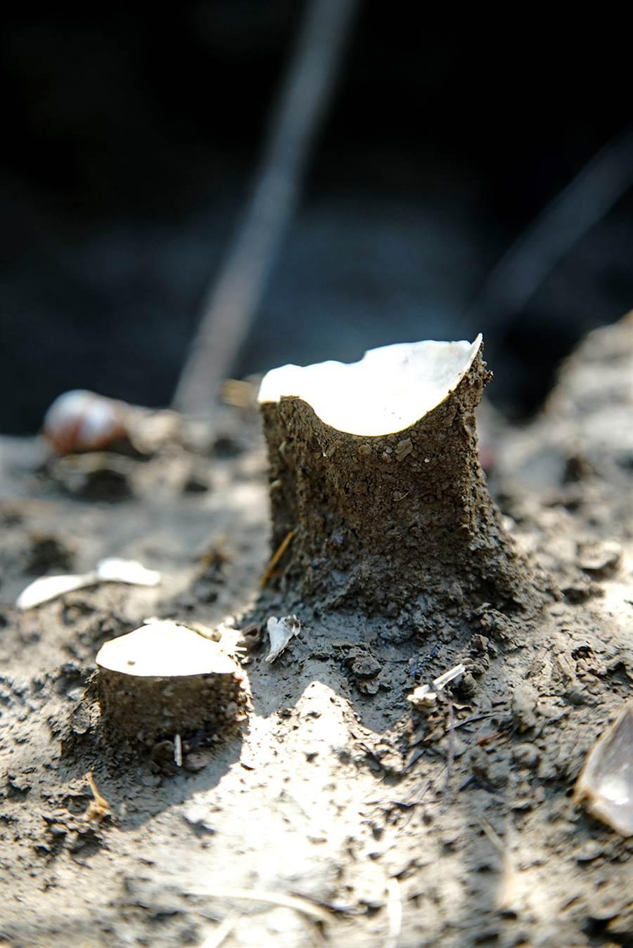 土指是一種細小指狀突起,通常頂上有一顆石粒或樹葉覆蓋,靠這粒小石保護石部泥土,抵抗雨滴的打擊。 (攝影/曾信耀)
