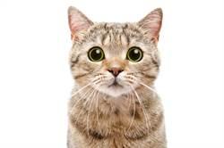 爸昔揚言帶貓回家就扔下樓 她回家看到這幕傻:誰才是親生的