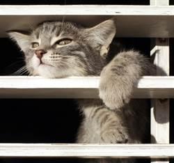黑貓「流進」百葉窗縫隙零阻力 網一看全傻了