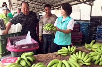 香蕉價格低迷 農糧署長:天氣一涼蕉價就會上來