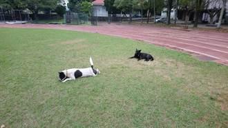 國中校內流浪犬逃離30公里認養家庭  校友請命