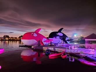 水景公園虎鯨展10月推小虎鯨 盼續約到農曆年