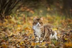 傻貓誤闖美洲獅棲地 主人憂恐沒命 6周後出乎意料