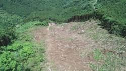 泰安山區驚見大面積伐木 承租戶喊冤是包商砍錯方向