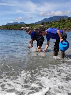 基翬漁港魚苗寶寶放流 促珊瑚礁更健康
