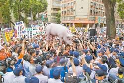美豬爭議後 最新政黨街頭民調結果跌破眼鏡