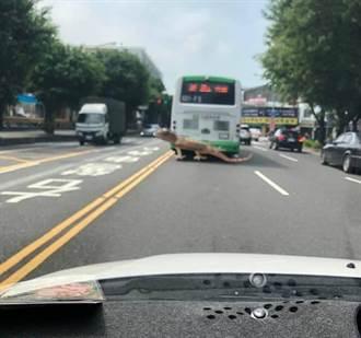 台南街頭驚見「長尾恐龍」緊貼公車 網眼花嚇歪