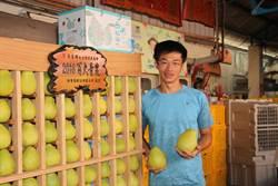 西湖水通伯柚子農莊 傳承50年老欉文旦品質