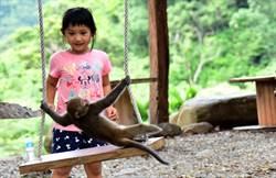 幼猴誤中陷阱獲救 成了園區活寶