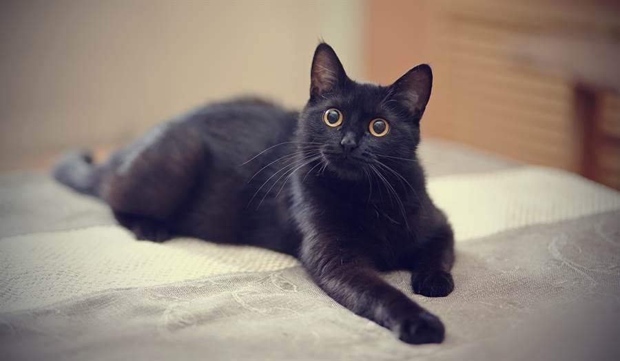 黑貓手術醒來「改穿短褲」 站37步怒瞪奴才:現在是怎樣(示意圖/達志影像)