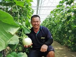 六腳小農網路賣瓜 翻轉傳統農業行銷