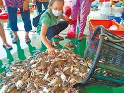 秋節將至 東石魚市場買氣旺