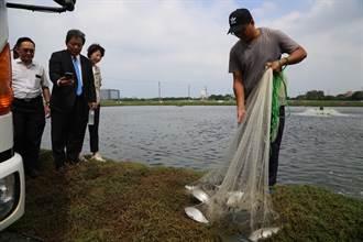 疫情導致台灣虱目魚價格低迷 漁業署同意辦促銷