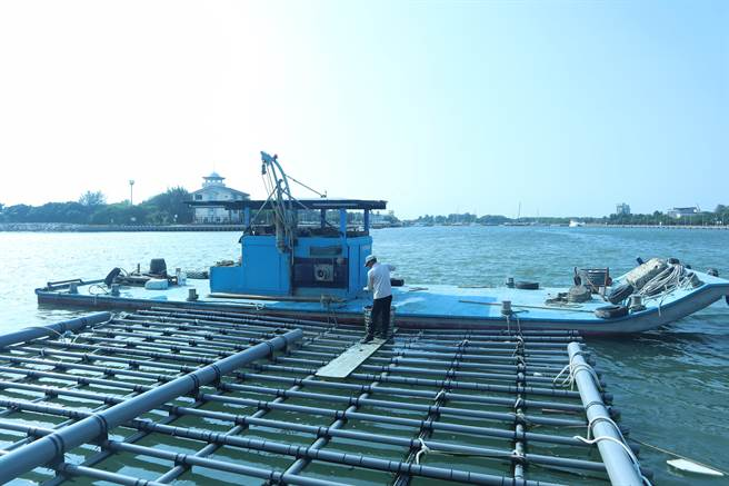 新型蚵棚沒有竹子,也不需要保麗龍製的傳統浮具,可大幅減少海廢。(李宜杰攝)